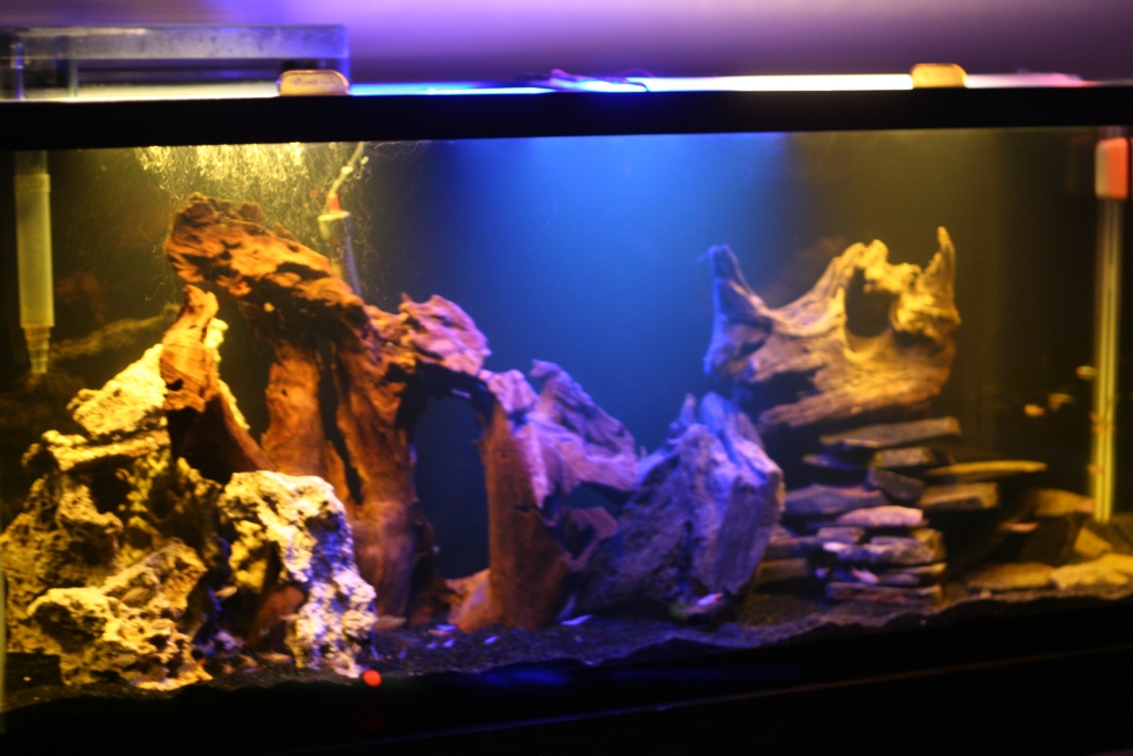 Good fish for 55 gallon tank 55 gallon just add water for 55 gal fish tank